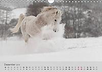 Pferde - Anmut und Stärke gepaart mit Magie (Wandkalender 2019 DIN A4 quer) - Produktdetailbild 12