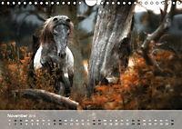 Pferde - Anmut und Stärke gepaart mit Magie (Wandkalender 2019 DIN A4 quer) - Produktdetailbild 11