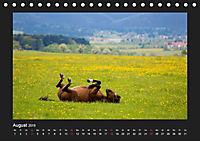 Pferde Frei wie der Wind (Tischkalender 2019 DIN A5 quer) - Produktdetailbild 8