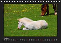 Pferde Frei wie der Wind (Tischkalender 2019 DIN A5 quer) - Produktdetailbild 4