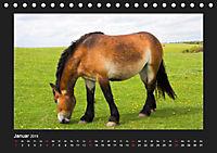 Pferde Frei wie der Wind (Tischkalender 2019 DIN A5 quer) - Produktdetailbild 1