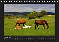 Pferde Frei wie der Wind (Tischkalender 2019 DIN A5 quer) - Produktdetailbild 2
