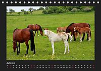 Pferde Frei wie der Wind (Tischkalender 2019 DIN A5 quer) - Produktdetailbild 6