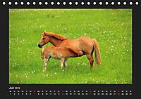 Pferde Frei wie der Wind (Tischkalender 2019 DIN A5 quer) - Produktdetailbild 7