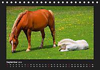 Pferde Frei wie der Wind (Tischkalender 2019 DIN A5 quer) - Produktdetailbild 9