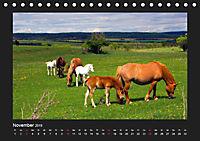 Pferde Frei wie der Wind (Tischkalender 2019 DIN A5 quer) - Produktdetailbild 11