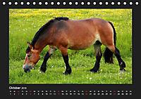 Pferde Frei wie der Wind (Tischkalender 2019 DIN A5 quer) - Produktdetailbild 10