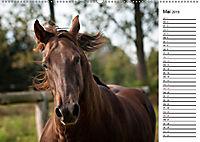 Pferde im schönen Taunus (Wandkalender 2019 DIN A2 quer) - Produktdetailbild 5