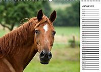 Pferde im schönen Taunus (Wandkalender 2019 DIN A2 quer) - Produktdetailbild 1