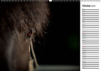 Pferde im schönen Taunus (Wandkalender 2019 DIN A2 quer) - Produktdetailbild 10
