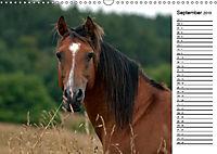Pferde im schönen Taunus (Wandkalender 2019 DIN A3 quer) - Produktdetailbild 5