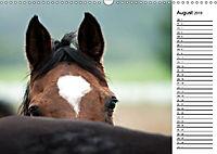 Pferde im schönen Taunus (Wandkalender 2019 DIN A3 quer) - Produktdetailbild 1