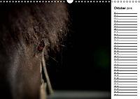 Pferde im schönen Taunus (Wandkalender 2019 DIN A3 quer) - Produktdetailbild 2