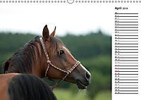 Pferde im schönen Taunus (Wandkalender 2019 DIN A3 quer) - Produktdetailbild 4