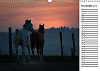 Pferde im schönen Taunus (Wandkalender 2019 DIN A3 quer) - Produktdetailbild 11