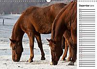 Pferde im schönen Taunus (Wandkalender 2019 DIN A3 quer) - Produktdetailbild 12