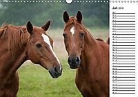 Pferde im schönen Taunus (Wandkalender 2019 DIN A3 quer) - Produktdetailbild 7