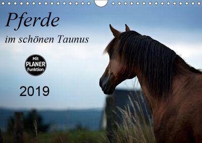 Pferde im schönen Taunus (Wandkalender 2019 DIN A4 quer), Petra Schiller