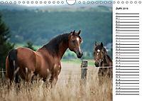 Pferde im schönen Taunus (Wandkalender 2019 DIN A4 quer) - Produktdetailbild 6