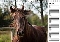 Pferde im schönen Taunus (Wandkalender 2019 DIN A4 quer) - Produktdetailbild 5