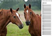 Pferde im schönen Taunus (Wandkalender 2019 DIN A4 quer) - Produktdetailbild 7