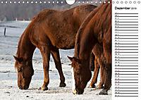 Pferde im schönen Taunus (Wandkalender 2019 DIN A4 quer) - Produktdetailbild 12