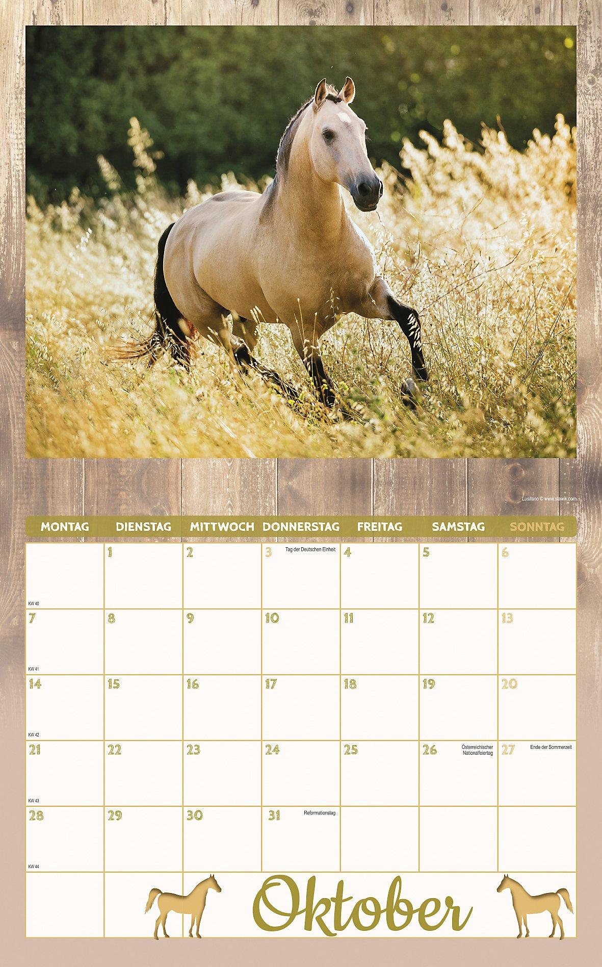 pferde kalender set 2019 8tlg kalender bei. Black Bedroom Furniture Sets. Home Design Ideas