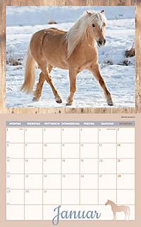 Pferde Kalenderpaket 2018, 6-tlg. - Produktdetailbild 1