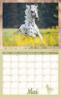 Pferde Kalenderpaket 2018, 6-tlg. - Produktdetailbild 3