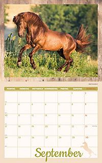 Pferde Kalenderpaket 2018, 6-tlg. - Produktdetailbild 6