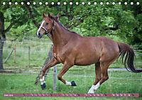 Pferde - kraftvolle Eleganz (Tischkalender 2019 DIN A5 quer) - Produktdetailbild 6