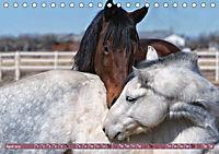Pferde - kraftvolle Eleganz (Tischkalender 2019 DIN A5 quer) - Produktdetailbild 4