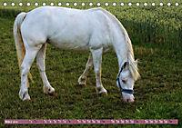 Pferde - kraftvolle Eleganz (Tischkalender 2019 DIN A5 quer) - Produktdetailbild 3