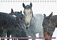 Pferde - kraftvolle Eleganz (Tischkalender 2019 DIN A5 quer) - Produktdetailbild 12