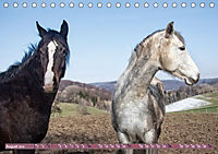 Pferde - kraftvolle Eleganz (Tischkalender 2019 DIN A5 quer) - Produktdetailbild 8