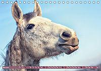 Pferde - kraftvolle Eleganz (Tischkalender 2019 DIN A5 quer) - Produktdetailbild 5