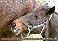 Pferde - kraftvolle Eleganz (Tischkalender 2019 DIN A5 quer) - Produktdetailbild 9