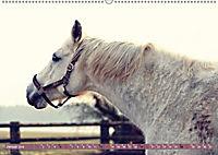 Pferde - kraftvolle Eleganz (Wandkalender 2019 DIN A2 quer) - Produktdetailbild 1