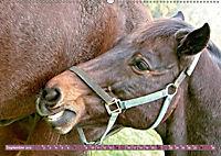 Pferde - kraftvolle Eleganz (Wandkalender 2019 DIN A2 quer) - Produktdetailbild 9