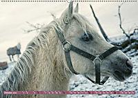 Pferde - kraftvolle Eleganz (Wandkalender 2019 DIN A2 quer) - Produktdetailbild 10