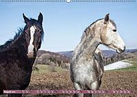 Pferde - kraftvolle Eleganz (Wandkalender 2019 DIN A2 quer) - Produktdetailbild 8
