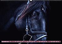 Pferde - kraftvolle Eleganz (Wandkalender 2019 DIN A2 quer) - Produktdetailbild 11