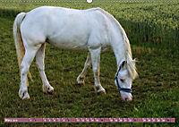 Pferde - kraftvolle Eleganz (Wandkalender 2019 DIN A2 quer) - Produktdetailbild 3