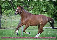 Pferde - kraftvolle Eleganz (Wandkalender 2019 DIN A2 quer) - Produktdetailbild 6