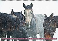 Pferde - kraftvolle Eleganz (Wandkalender 2019 DIN A2 quer) - Produktdetailbild 12