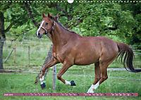 Pferde - kraftvolle Eleganz (Wandkalender 2019 DIN A3 quer) - Produktdetailbild 6