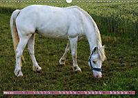 Pferde - kraftvolle Eleganz (Wandkalender 2019 DIN A3 quer) - Produktdetailbild 3