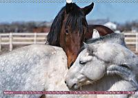 Pferde - kraftvolle Eleganz (Wandkalender 2019 DIN A3 quer) - Produktdetailbild 4