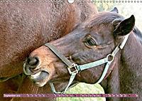 Pferde - kraftvolle Eleganz (Wandkalender 2019 DIN A3 quer) - Produktdetailbild 9