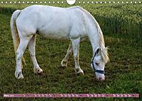 Pferde - kraftvolle Eleganz (Wandkalender 2019 DIN A4 quer) - Produktdetailbild 3